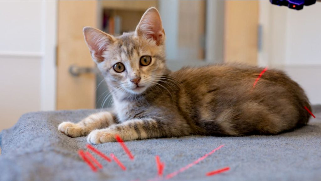 Dr. Todd volunteer at Seattle Humane Animal Shelter