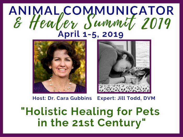 2019 Animal Communicator & Healing Summit - Jill Todd, DVM Interview