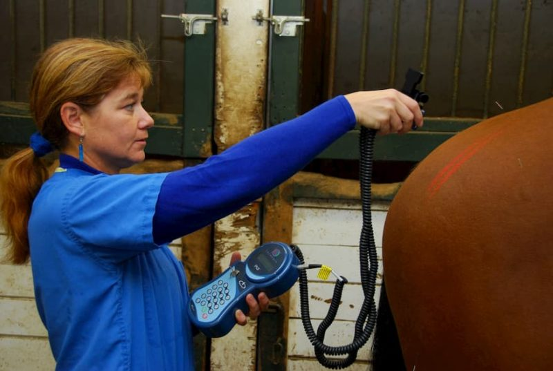 Equine acupuncture and cold laser therapy with Jill Todd, DVM