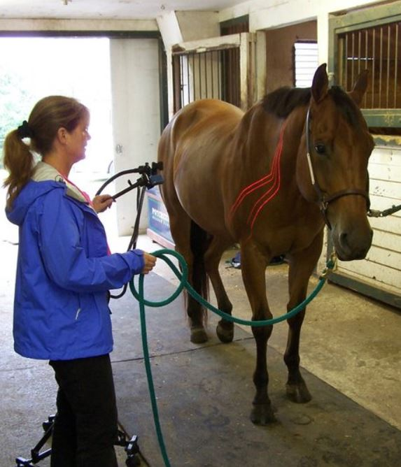 Equine acupuncture and cold laser therapy