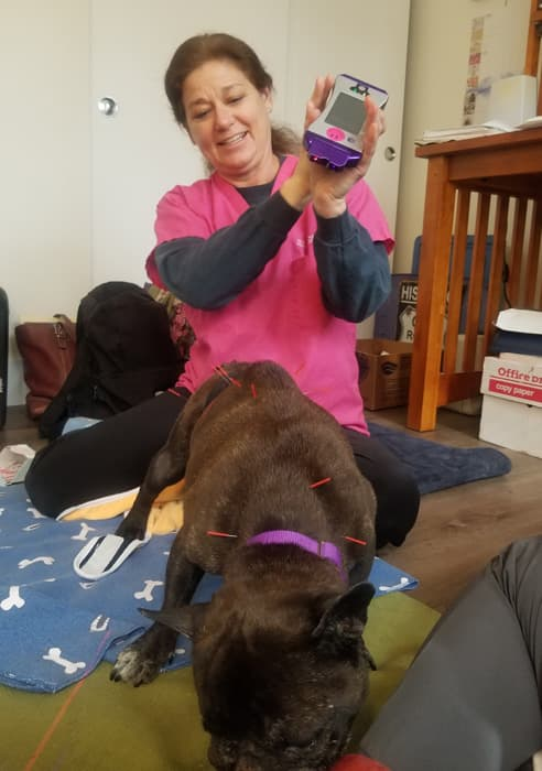 Cold Laser Therapy for Dogs