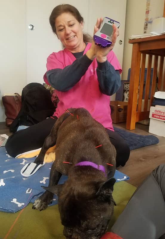 Jill Todd, DVM Cold Laser Therapy for Dogs, Cats, and Horses
