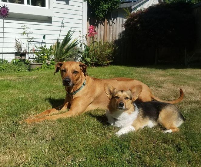 Pet Immunity Tips