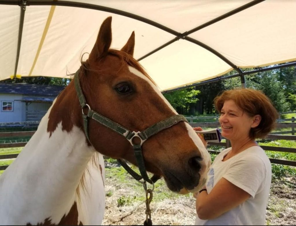 Jill Todd, DVM, Equine Medicine and Holistic Care